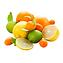 Citrus Splash.png