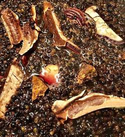 elderberry reishi ginger syrup