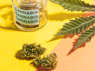 Implications and Penal Provisions of Marijuana Possession