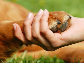 Is Coexistence of  Human Rights And Animal Rights Possible?