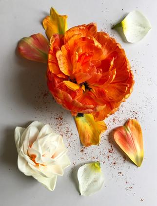 tulip_daffodil.jpg