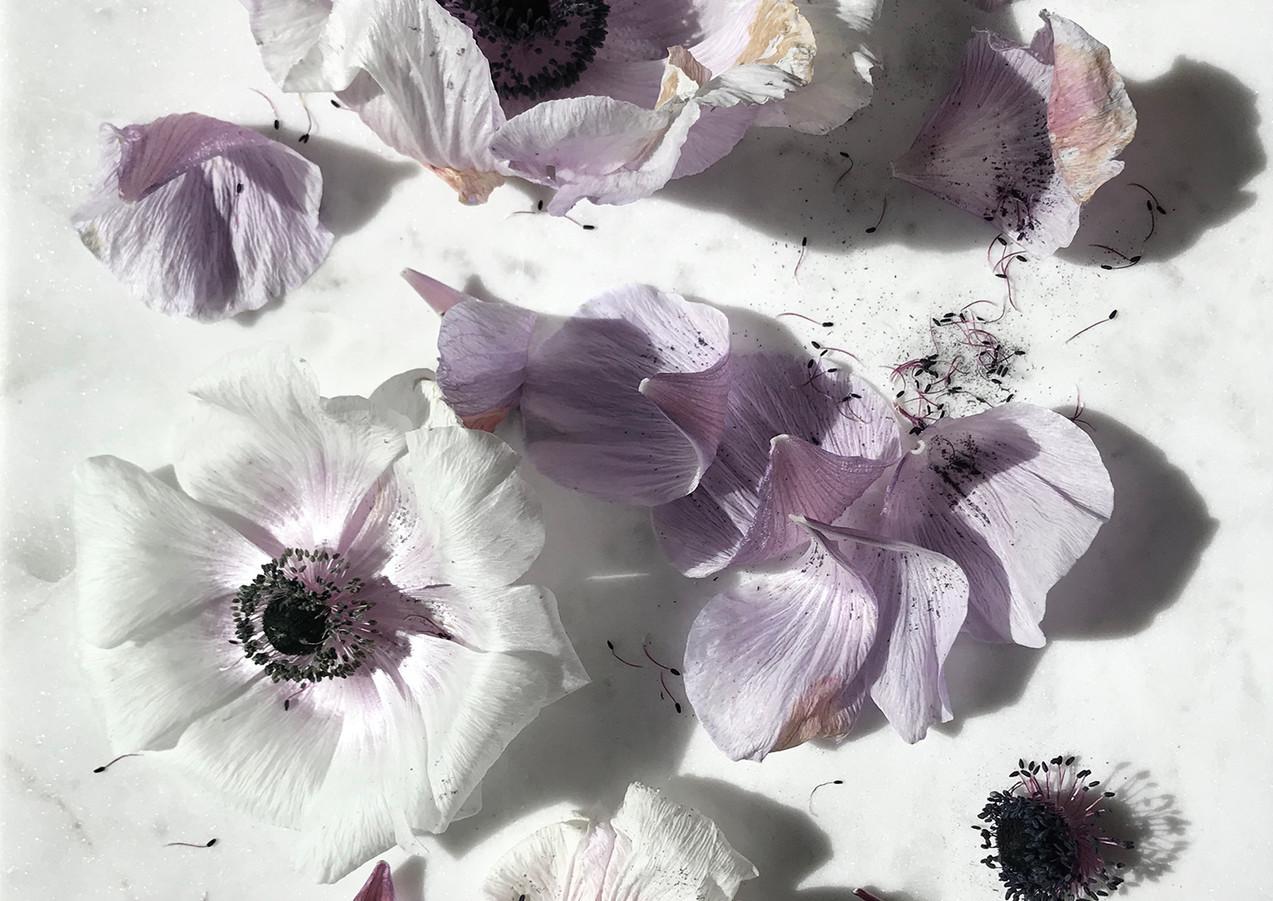floral27.jpg