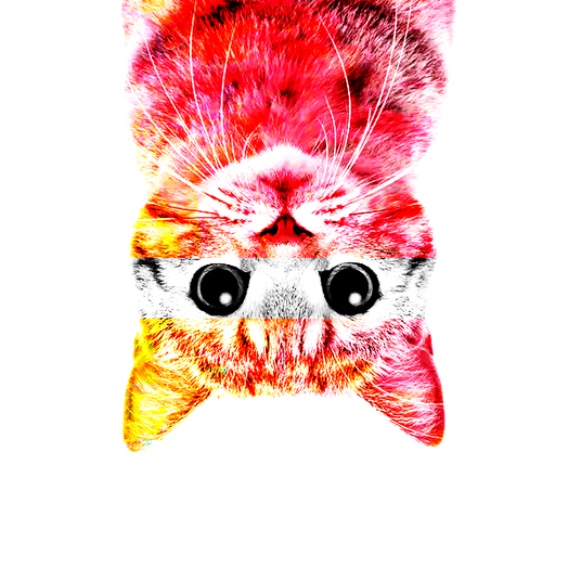 The pink Molky cat