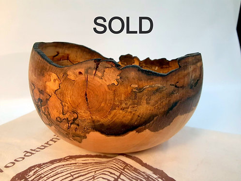 Maple-SOLD