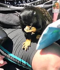 Customer & monkey 2 Lake Eola Orlando FL