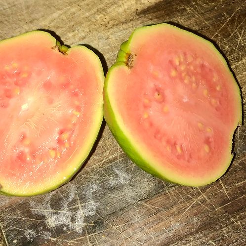 Guava Pink Barbi variety
