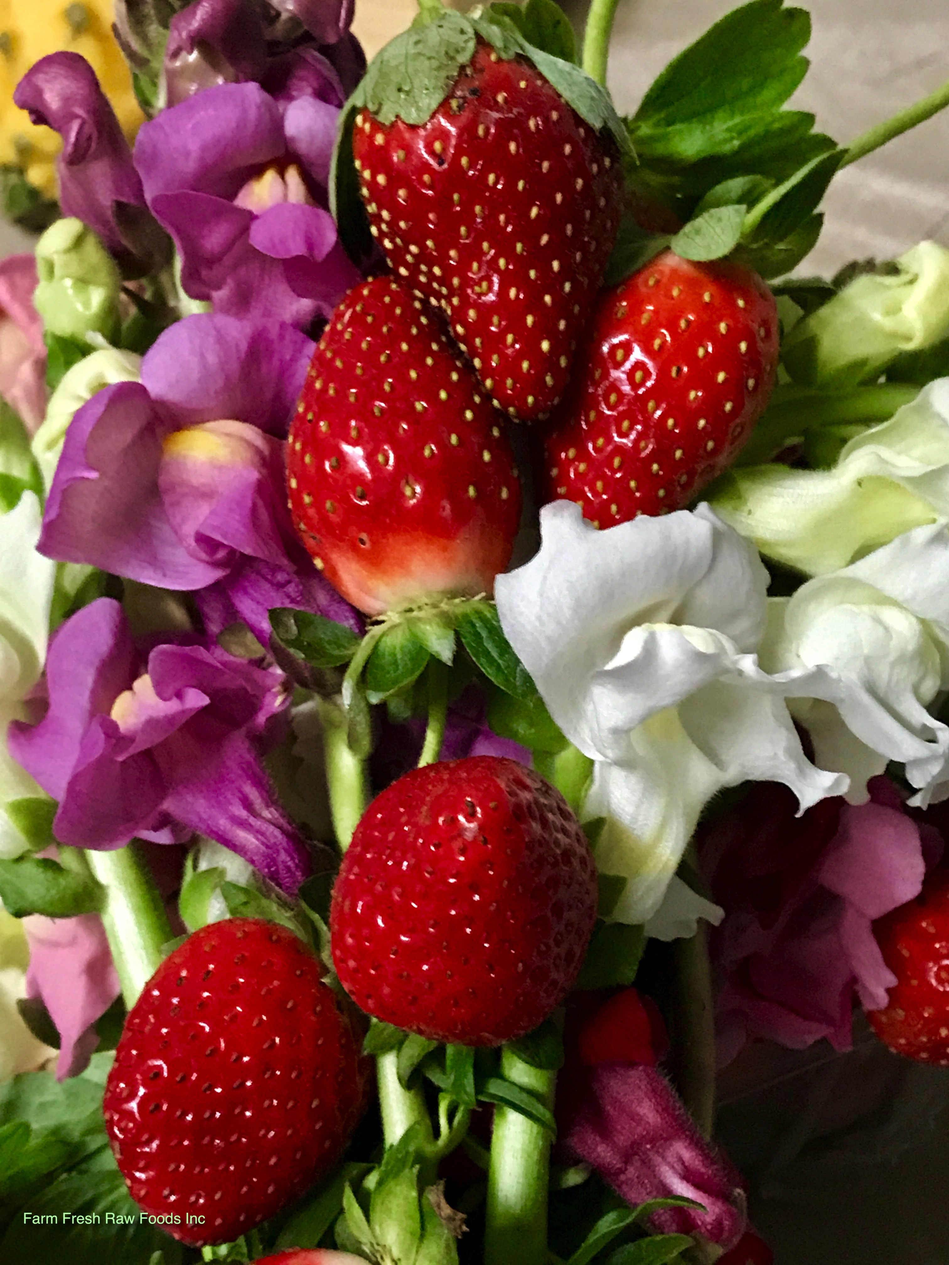 Strawberries & flowers FL