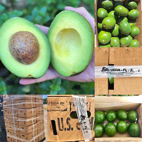 Avocado Florida Varieties