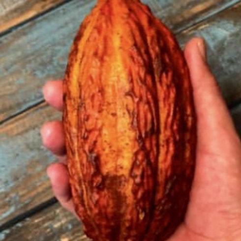 Cacoa Fruit