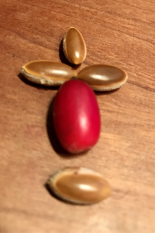 Miracle Fruit Seeds