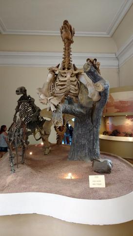 Paleontologia Preguiças Gigantes