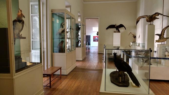 Sala Aves do Museu Nacional