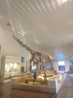 Exposição Maxakalisaurus topai