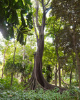 Horto Botânico