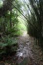 Trecho de trilha do Rio Timbuí