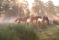 horses-in-misty-sunbeams-PB2SB8H.jpg