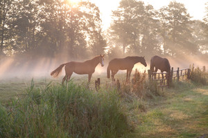 horses-in-misty-sunbeams-PB2SB8H.jpg