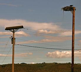 nesting deterrents