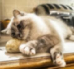A cat picture