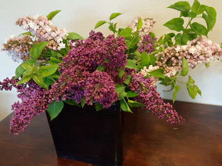 Arranging 101: Lilacs in a Vase