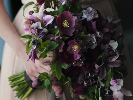 Featured Fiori: Hellebore