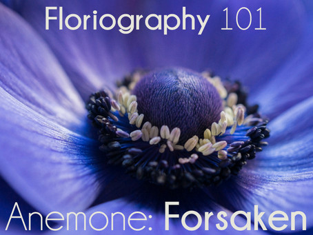 Floriography Friday: Anemones
