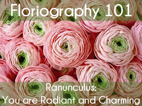 Floriography Friday: Ranunculus