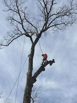 Tree-Service-NJ-1.jpg