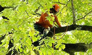 tree-trimmingSERVICE.jpg