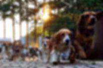 비글동물구조메인.jpg