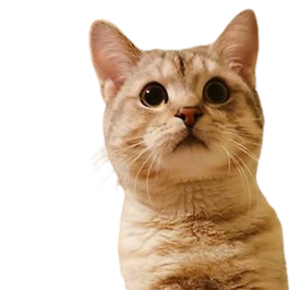 cat in transparent background_5798080.pn
