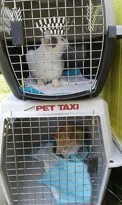 spay and neuter to save many lives feral stray abandoned