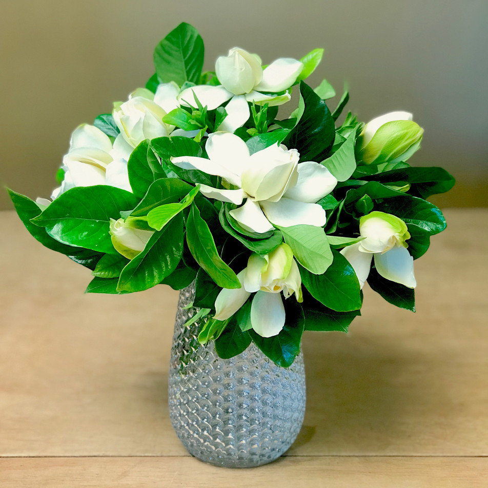 Gracious Gardenias - Click to order on our Shopping Site