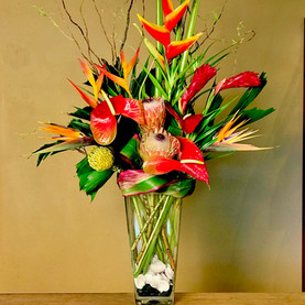 Tropical Firefish - Click to order on our Shopping Site