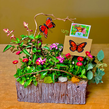Butterfly Garden ~ Click to Order on our Shopping Site>