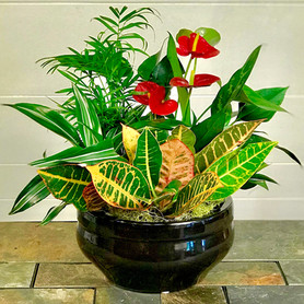 Tropical Garden - Click to order on our Shopping Site