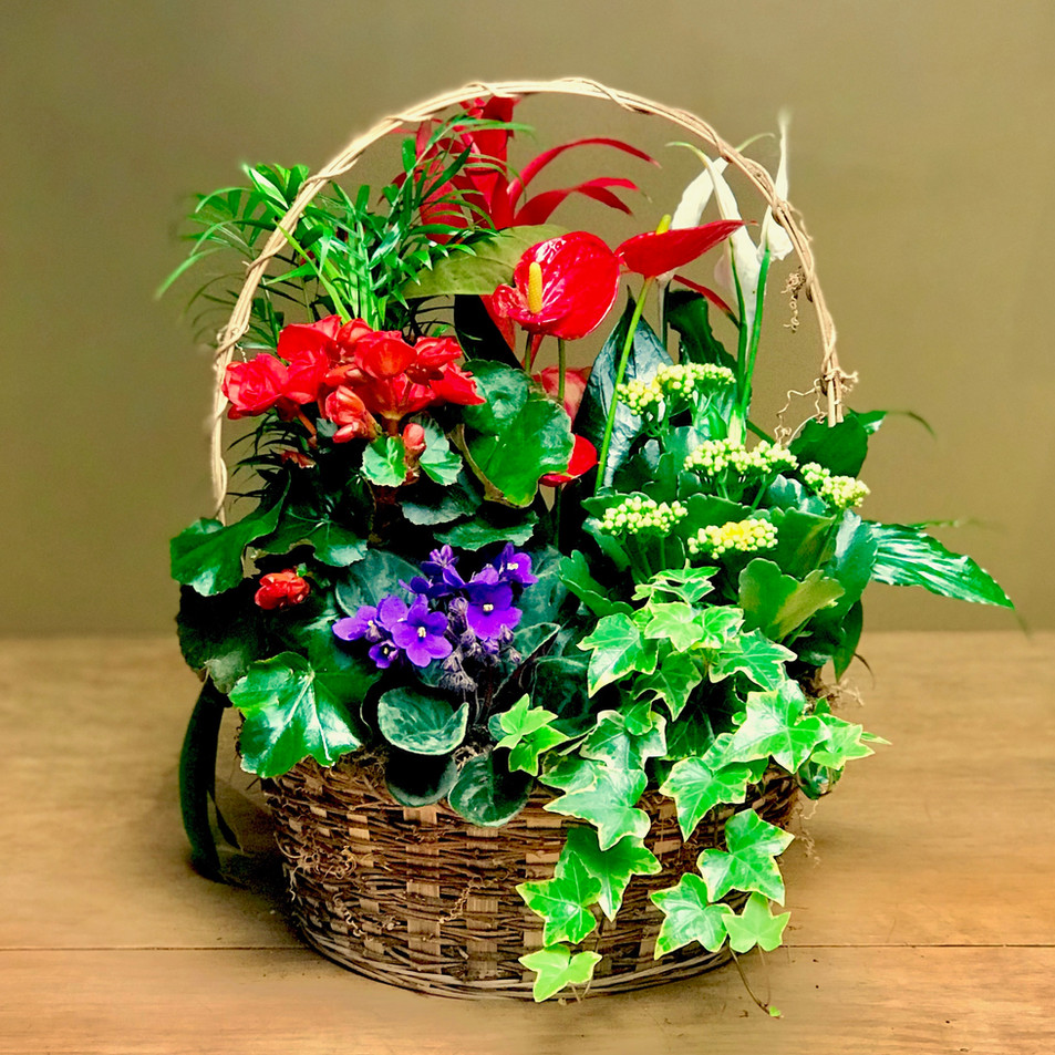 https://www.shopferrariflorist.com/basket-arrangement/guineveres-garden/prod6660320?skuId=sku6470491&zipMin=