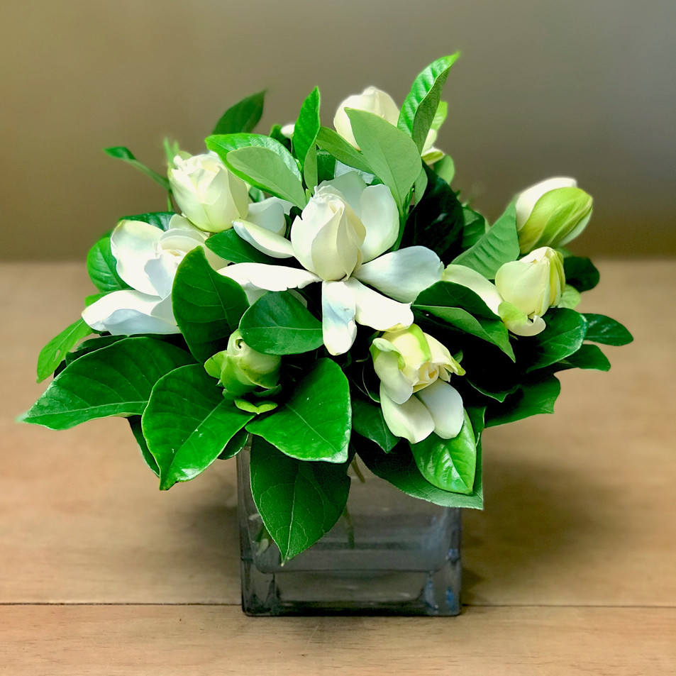 Gardenia Grandeur - Click to order on our Shopping Site