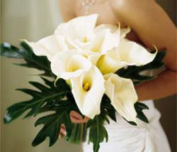 bridesbouquetCallaLilies