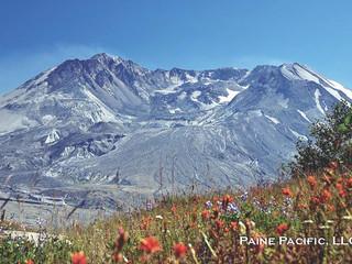 Pacific Paine Celebrates 20 Year Anniversary