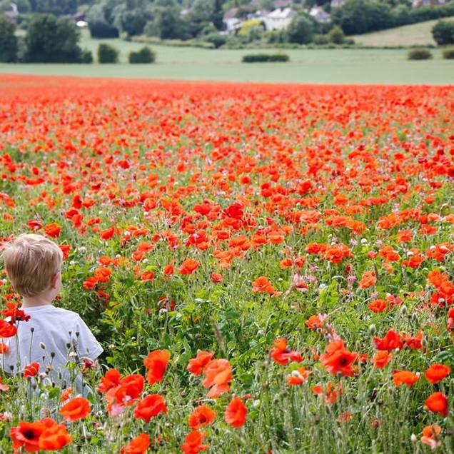 Child in Hertfordshire Poppy Field