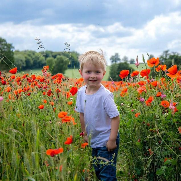Child in Poppy Field