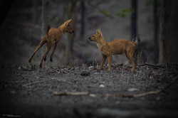 AFB-Pench 2016-0700