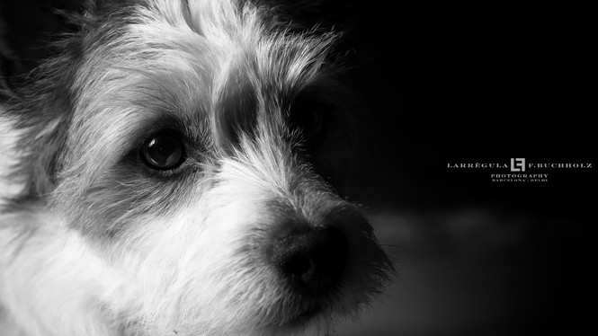 Fotografia de mascotas | Pet Photogaphy