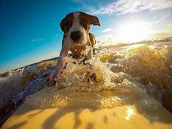 dog-2289451.jpg