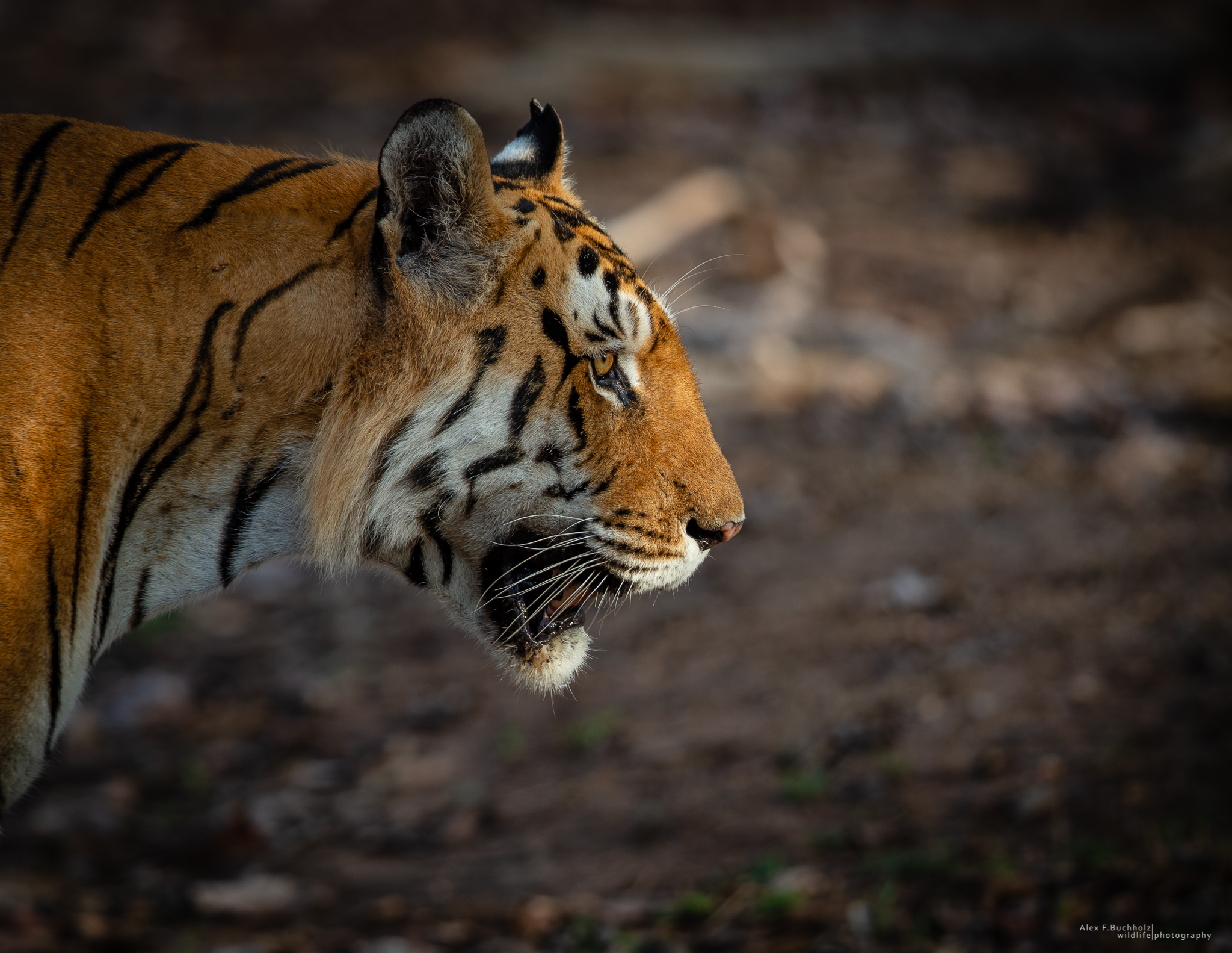 AFB-Pench 2016-1007