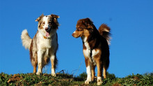 La distancia individual de un perro