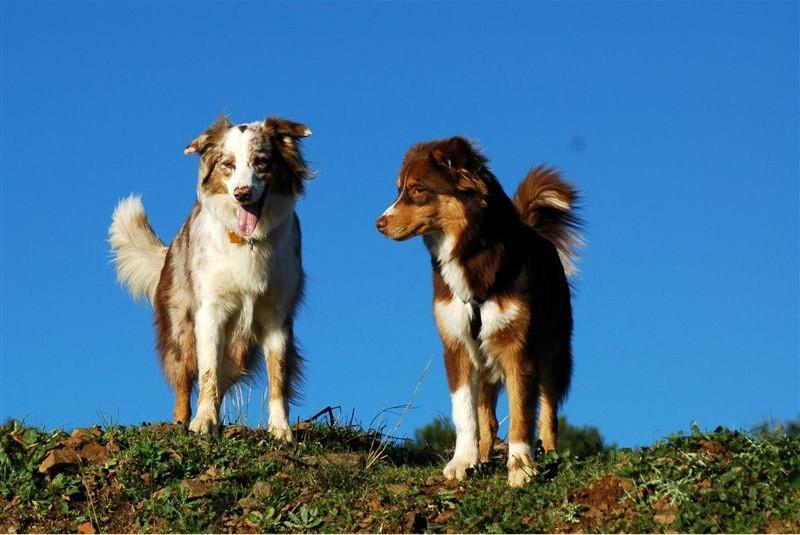 Escuela canina barcelona