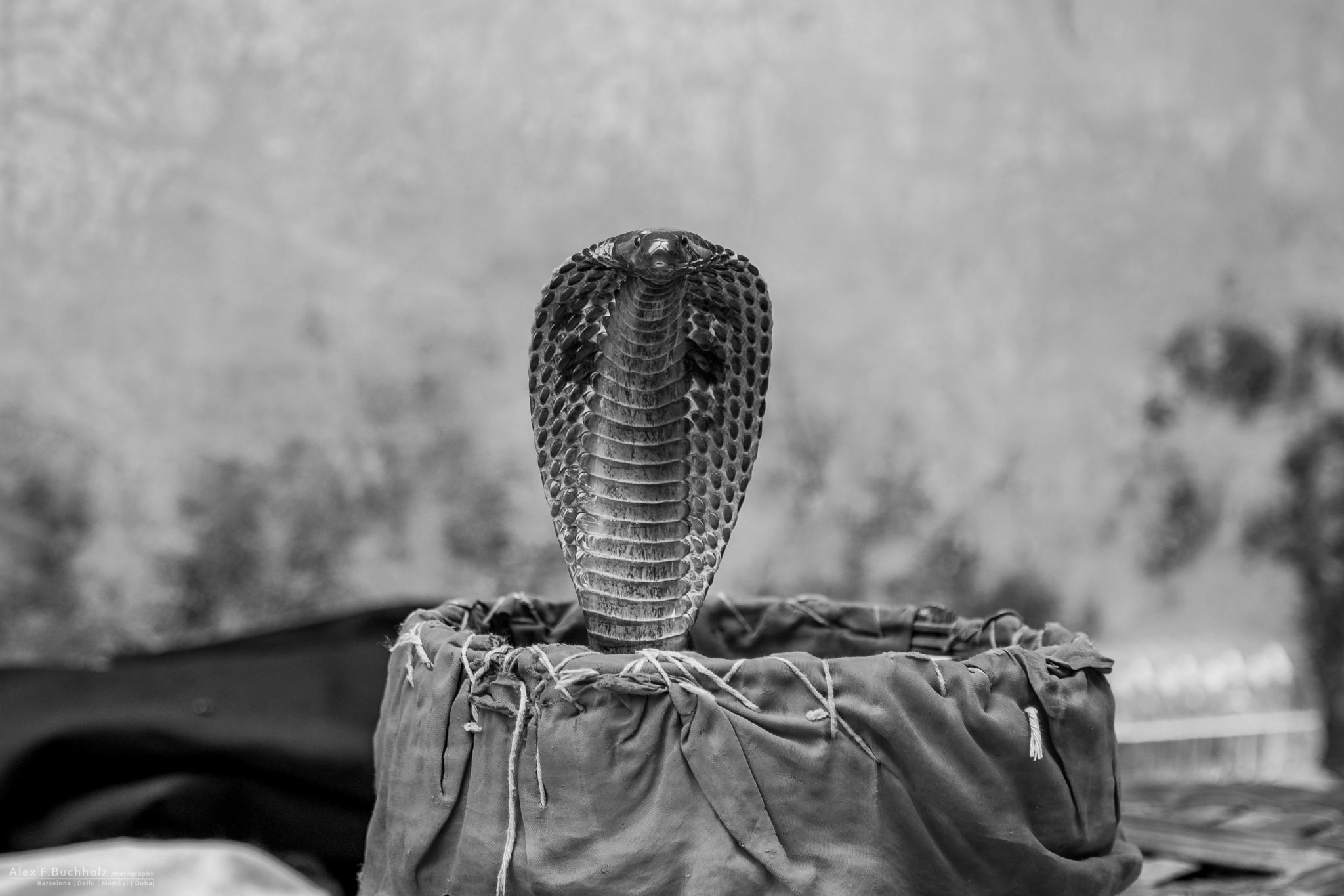 AFB15-Jaipur-028