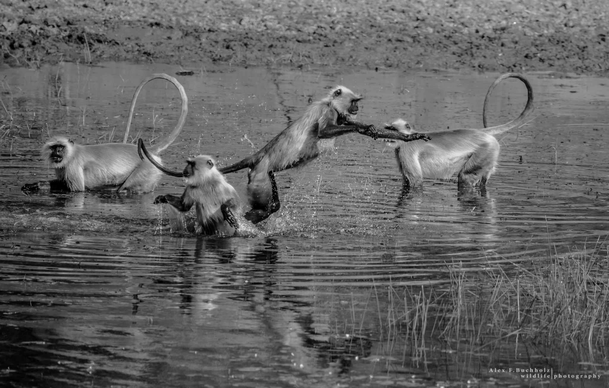 Wildlife Photographer India